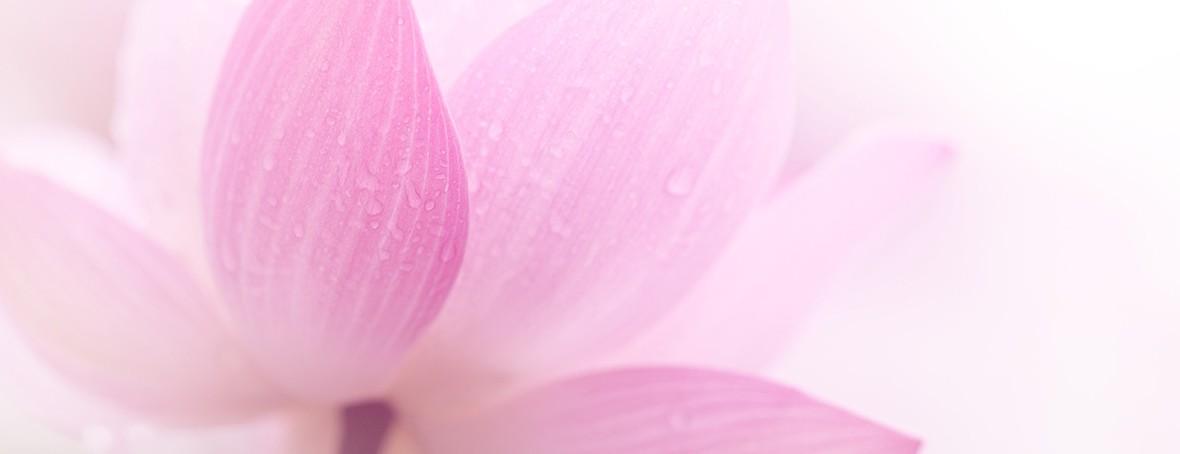 Lotus 1200